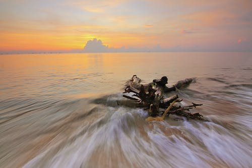 Gratis arkivbilde med daggry, drivved, hav, havkyst
