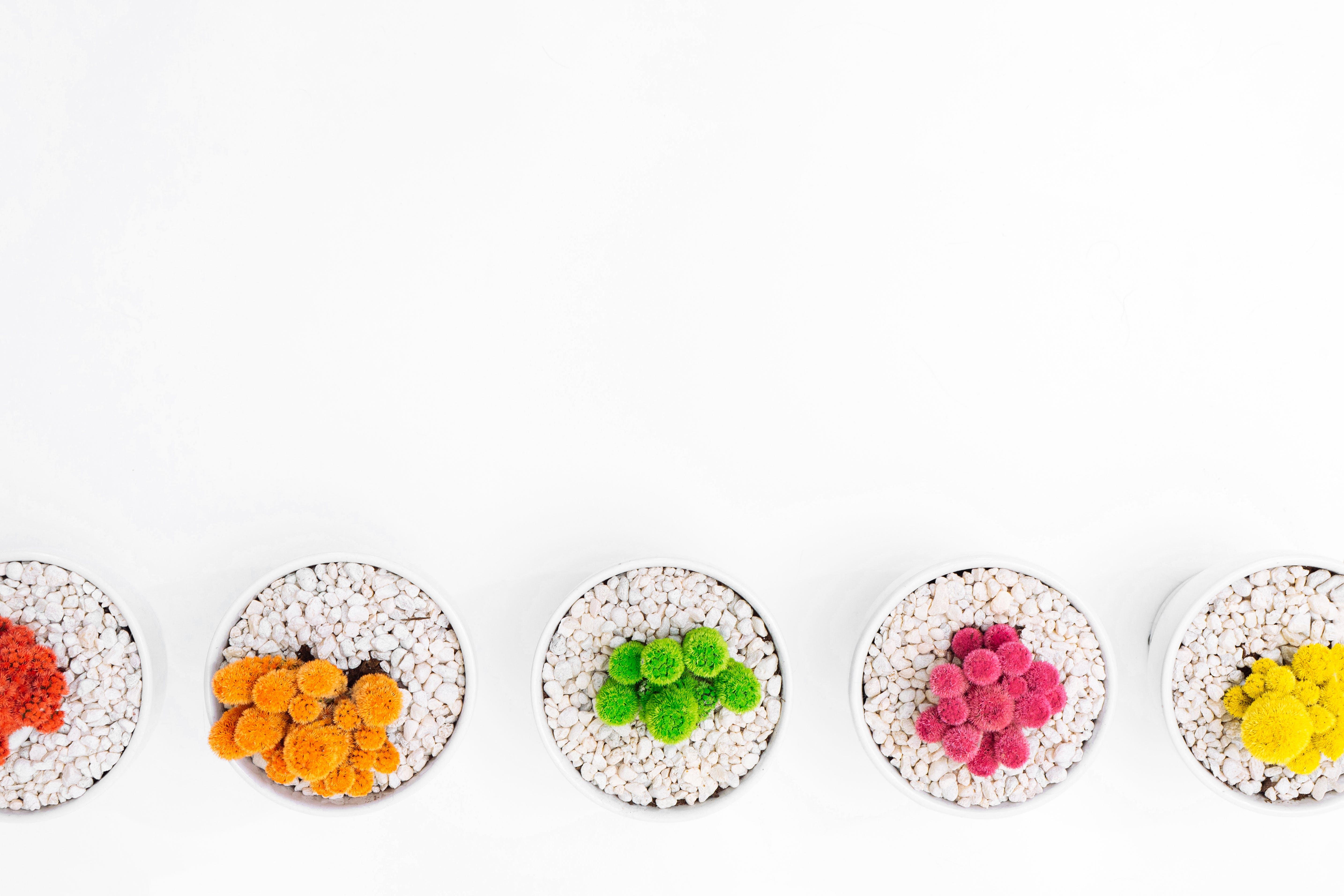 Kostenloses Stock Foto zu felsen, pflanze, topf, bunt