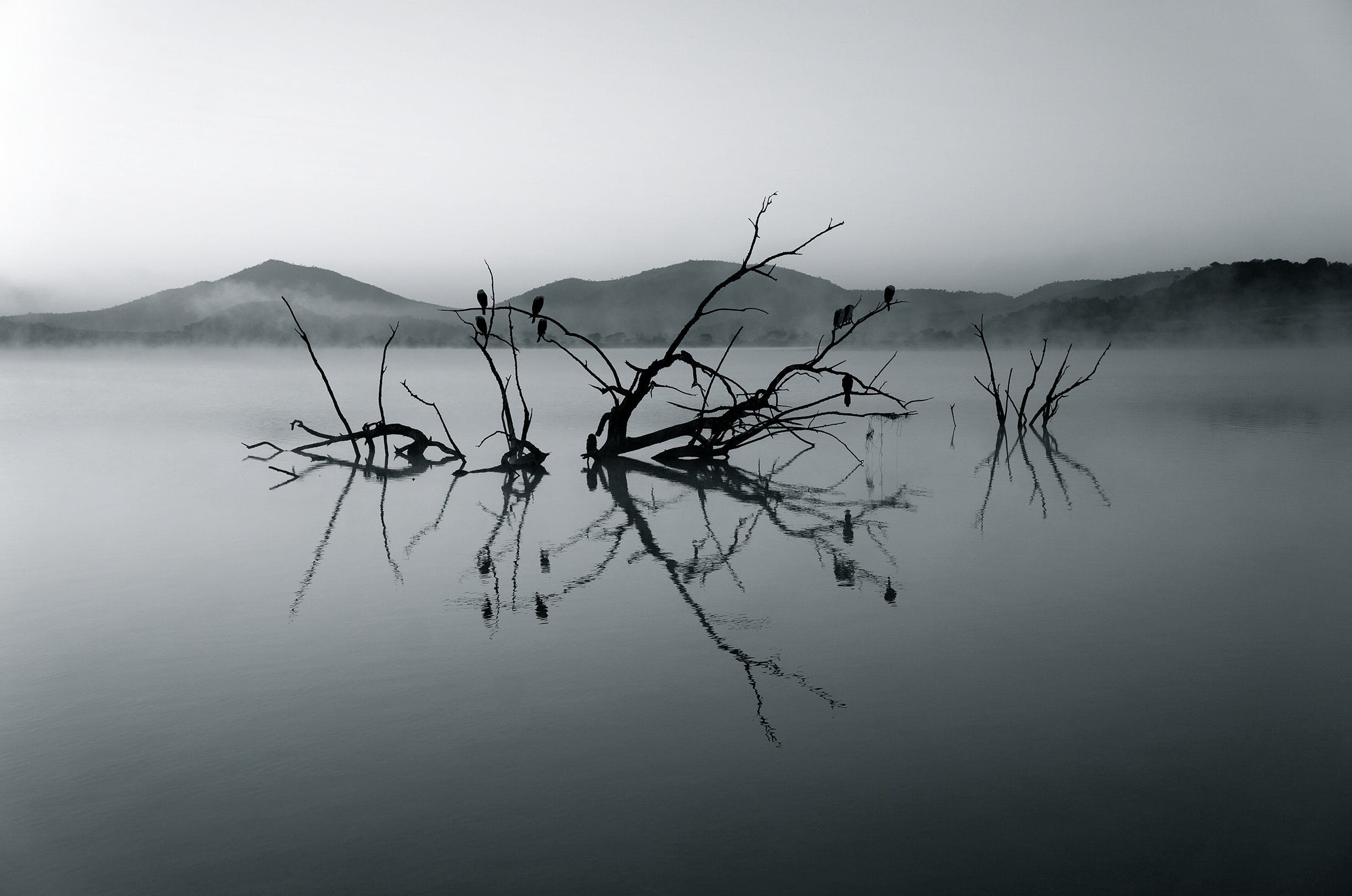 Silhouette of Tree Branch on Body of Water