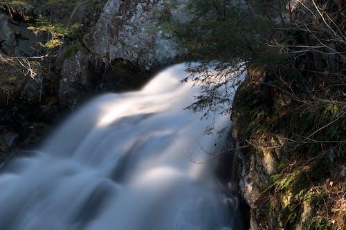 Imagine de stoc gratuită din apă, arbori, cascadă, codru