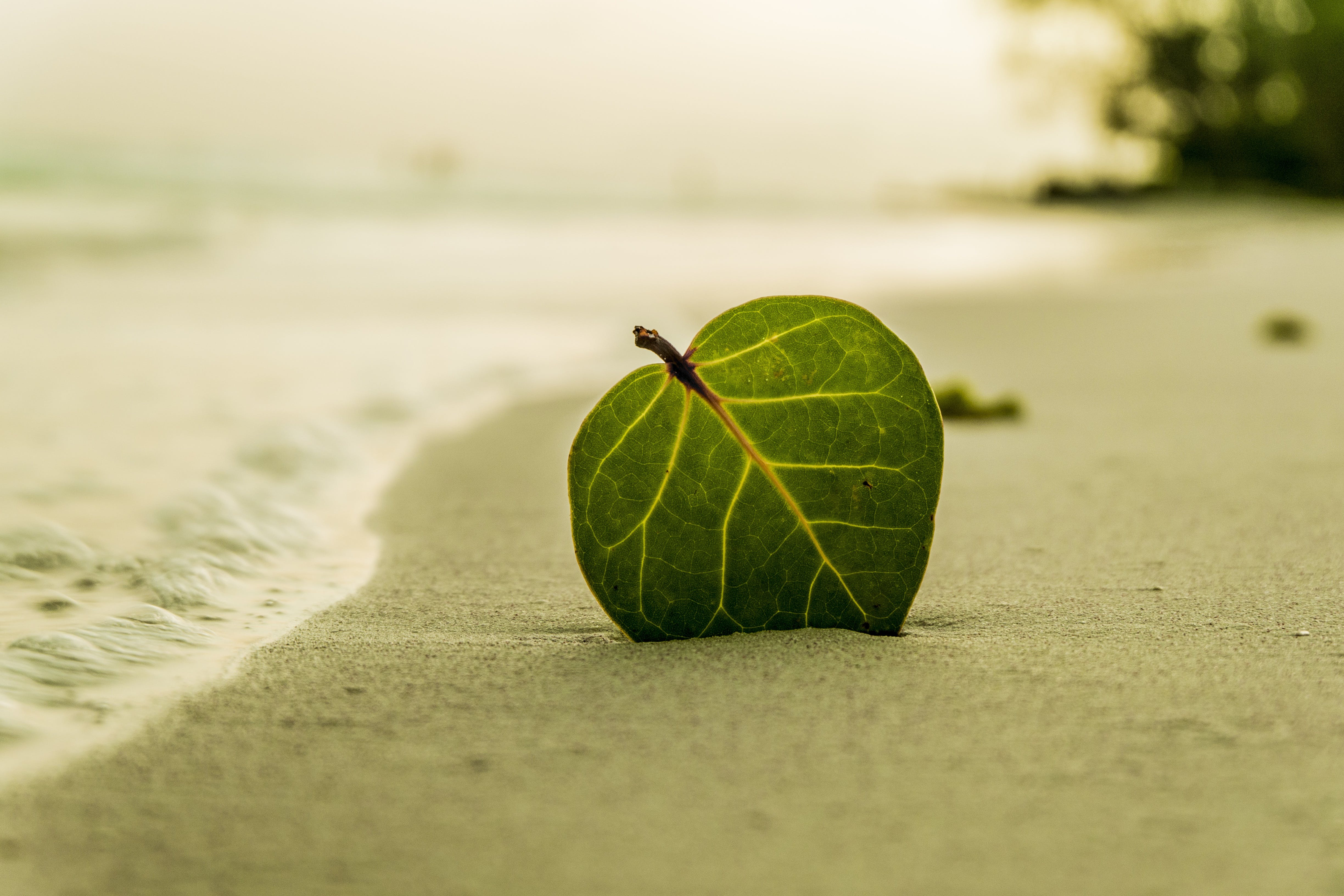 Green Ovate Leaf on Sand Near Shore