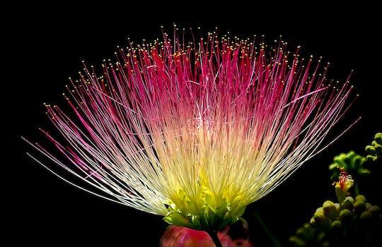بستان ورد المصــــــــراوية - صفحة 5 Flower-exotic-colorful-pink-39574