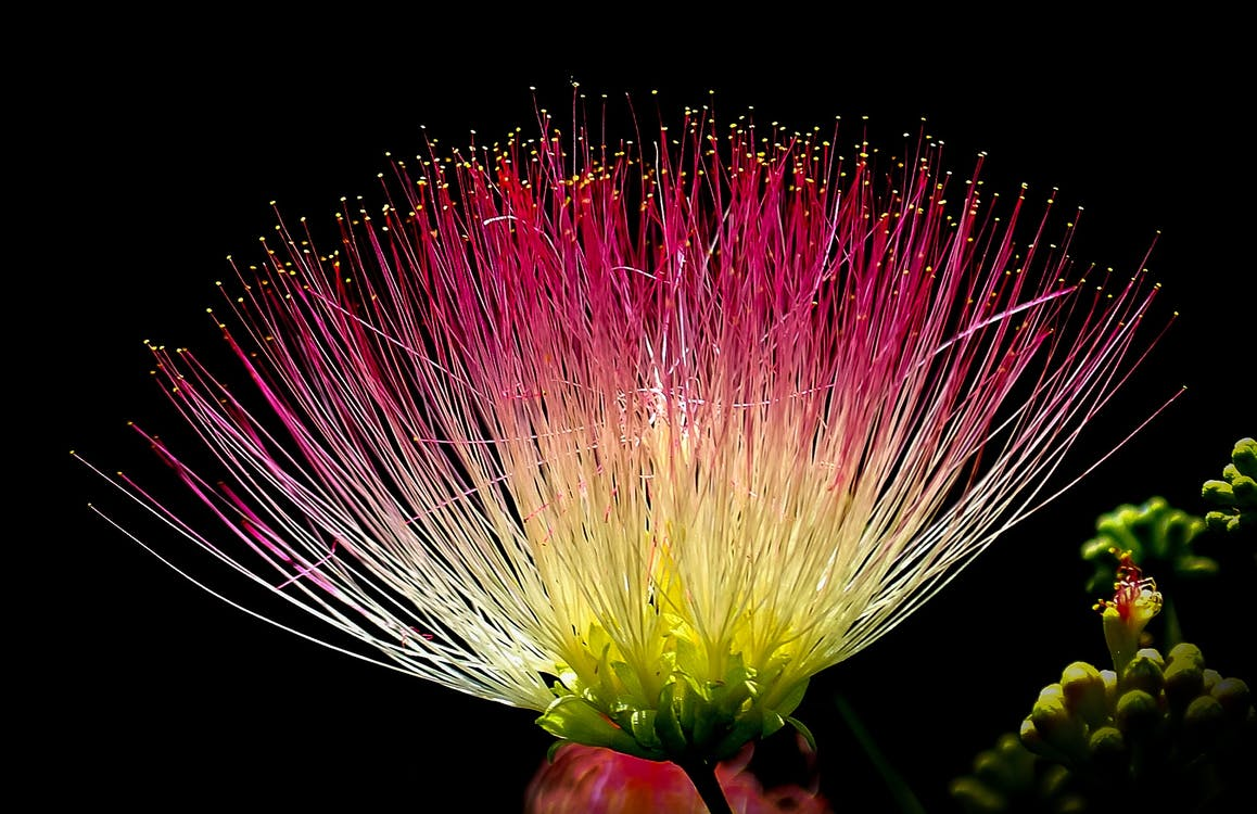 Download 4600 Gambar Bunga Yang Terindah Gratis Terbaru