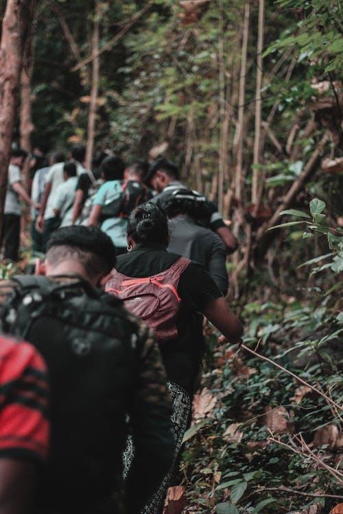 Ilmainen kuvapankkikuva tunnisteilla asu, backpackers, ihmiset, metsä