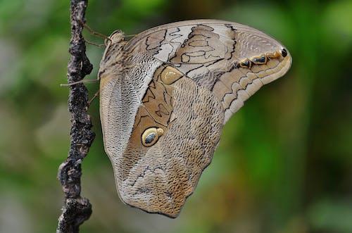 Kostnadsfri bild av fjäril, insekt, makro, natur