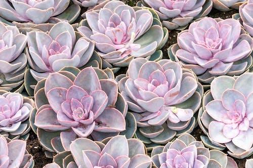 Foto profissional grátis de close, cor-de-rosa, detalhe, ecológico