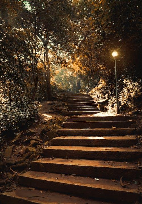 ステップ, パーク, 木, 街灯の無料の写真素材