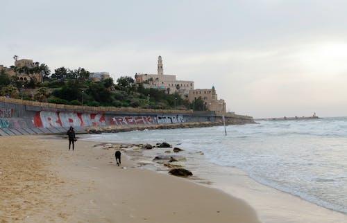 Foto profissional grátis de cachorro, cão, Israel, jaffa