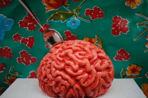 Free stock photo of art, brain, plastic, sculpture
