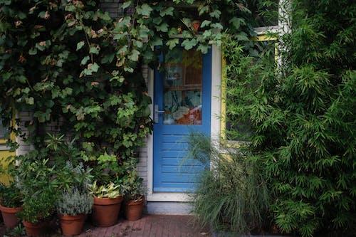 Foto profissional grátis de ecológico, entrada, plantas, porta