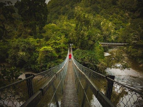 Základová fotografie zdarma na téma idylický, les, malebný, most