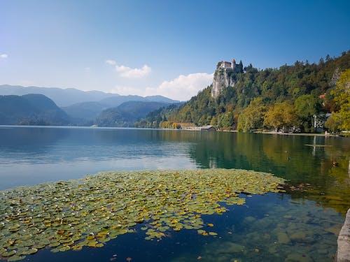 假期, 天性, 寧靜, 斯洛文尼亚 的 免费素材照片
