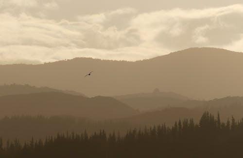 Základová fotografie zdarma na téma abel tasman, klid, klidný, let