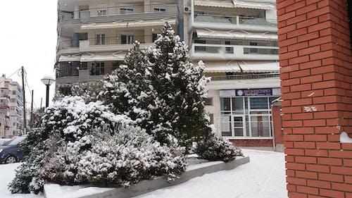 Free stock photo of christmas, christmas tree, snow