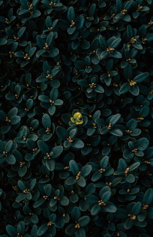Foto stok gratis abstrak, alam, aneh, bunga