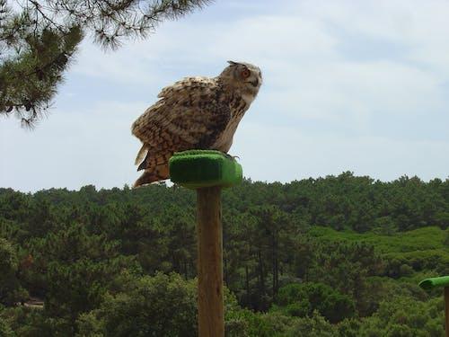 Free stock photo of bird, bird of prey, dark night, eagle owl