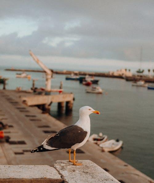 Ảnh lưu trữ miễn phí về chim, con vật, động vật, động vật hoang dã