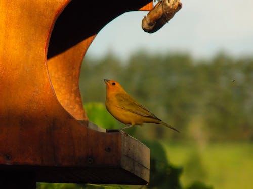 Free stock photo of animal, bird, fly