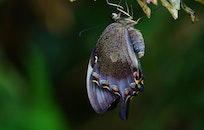 animal, insect, macro