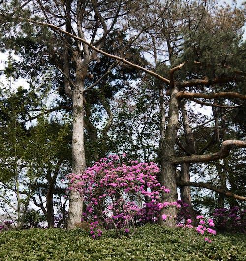 コントラスト, 彩度の低い, 木, 枠の無料の写真素材