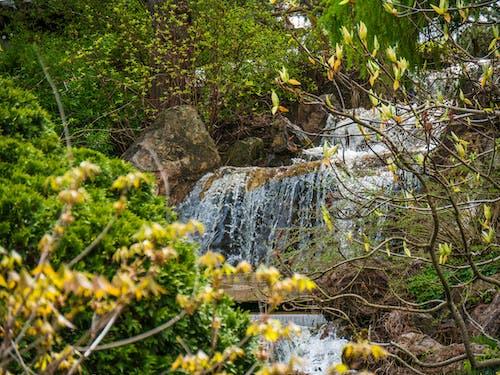 フラワーズ, フロー, 岩, 木の無料の写真素材