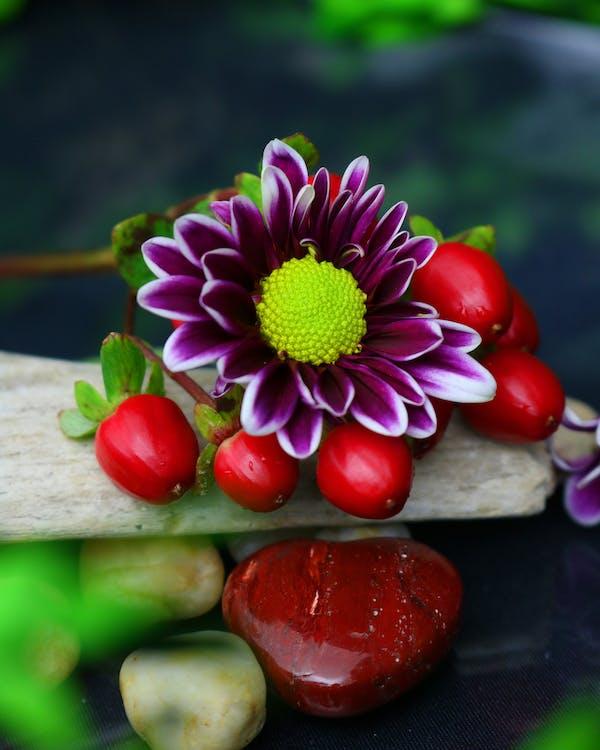 Close-up Shot Of A Flower