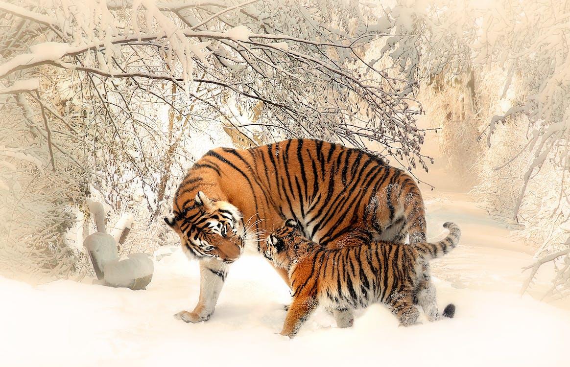 chụp ảnh động vật, động vật, động vật hoang dã