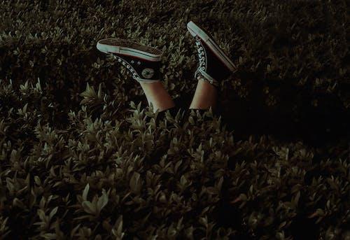 Foto stok gratis alas kaki, belukar, kaki, sepatu