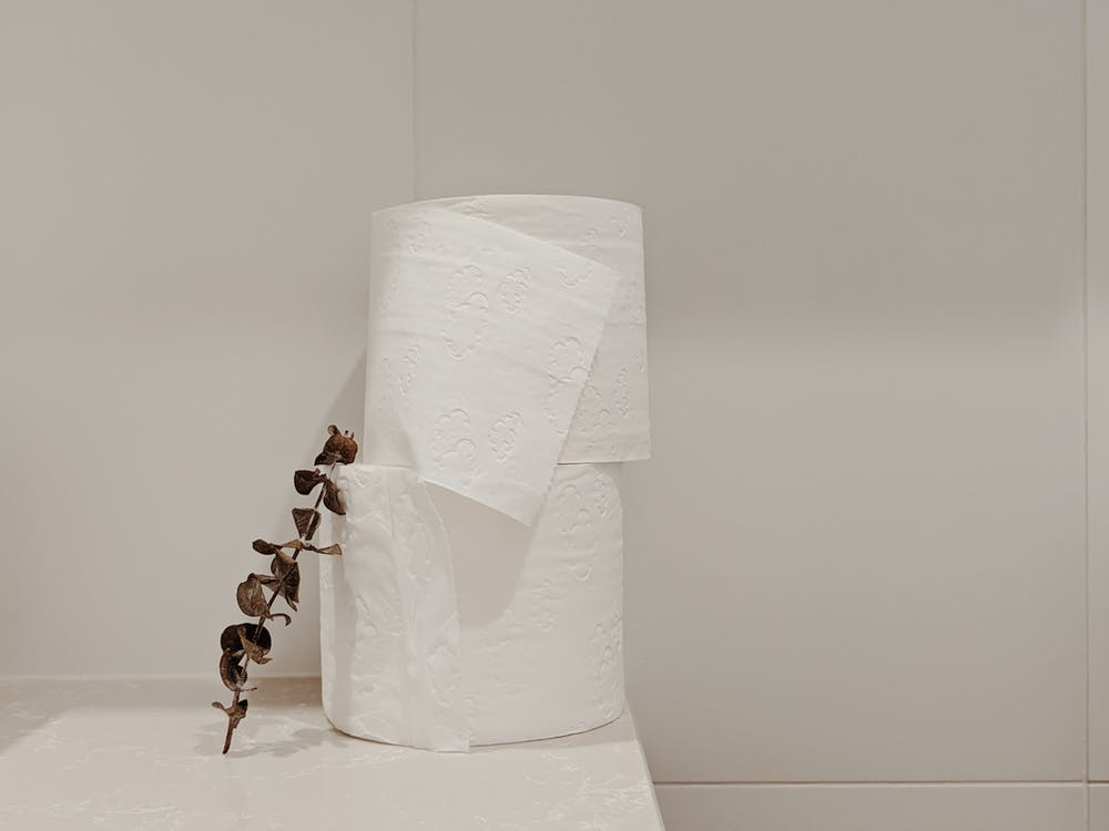 White Toilet Paper Roll and Eucalyptus Branch