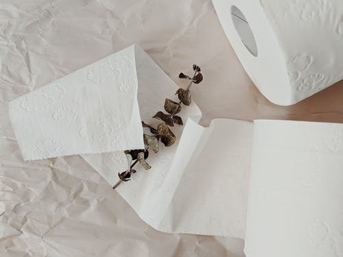 White Toilet Paper Rolls and Eucalyptus Branch
