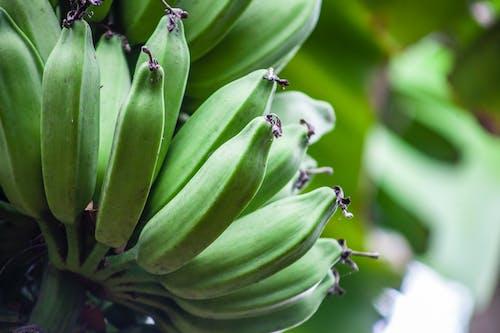 Ingyenes stockfotó alimentos, árboles verdes, banán, buena comida témában
