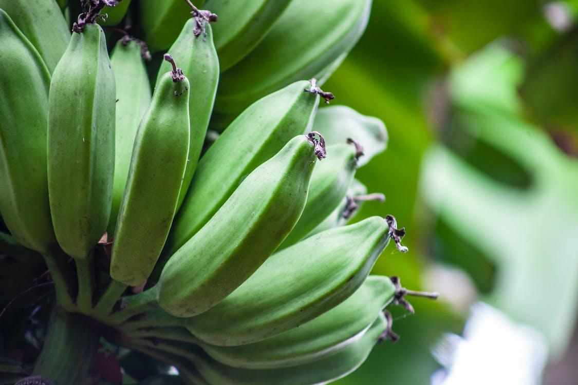 Green Banana Fruits in Close Up Photography