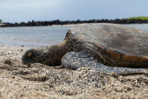 Turtle On Sand Near Body Of Water