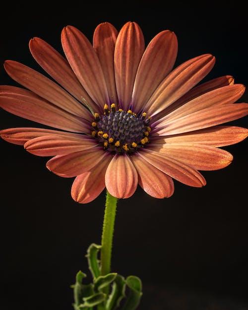 Gratis lagerfoto af appelsin, blomst, fokus stack, makro