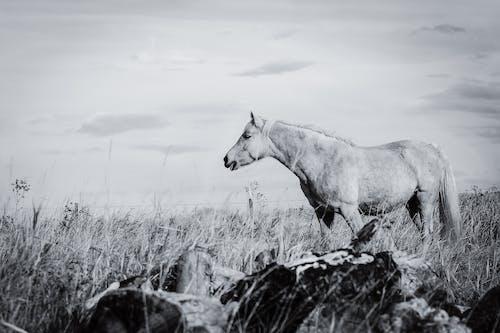 Free stock photo of horse