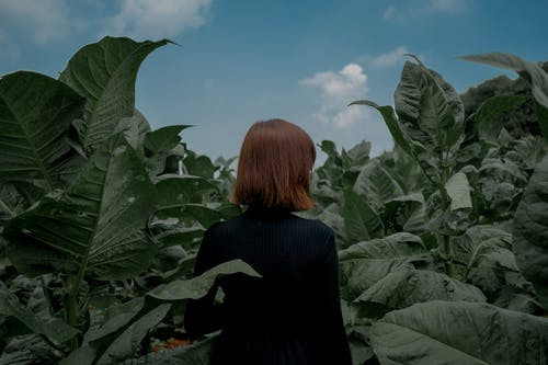 Woman In The Middle Of Plants