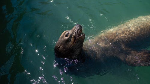 Free stock photo of ocean, sea lion