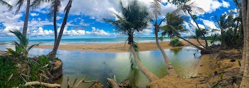 Free stock photo of beach, palm tree, panorama