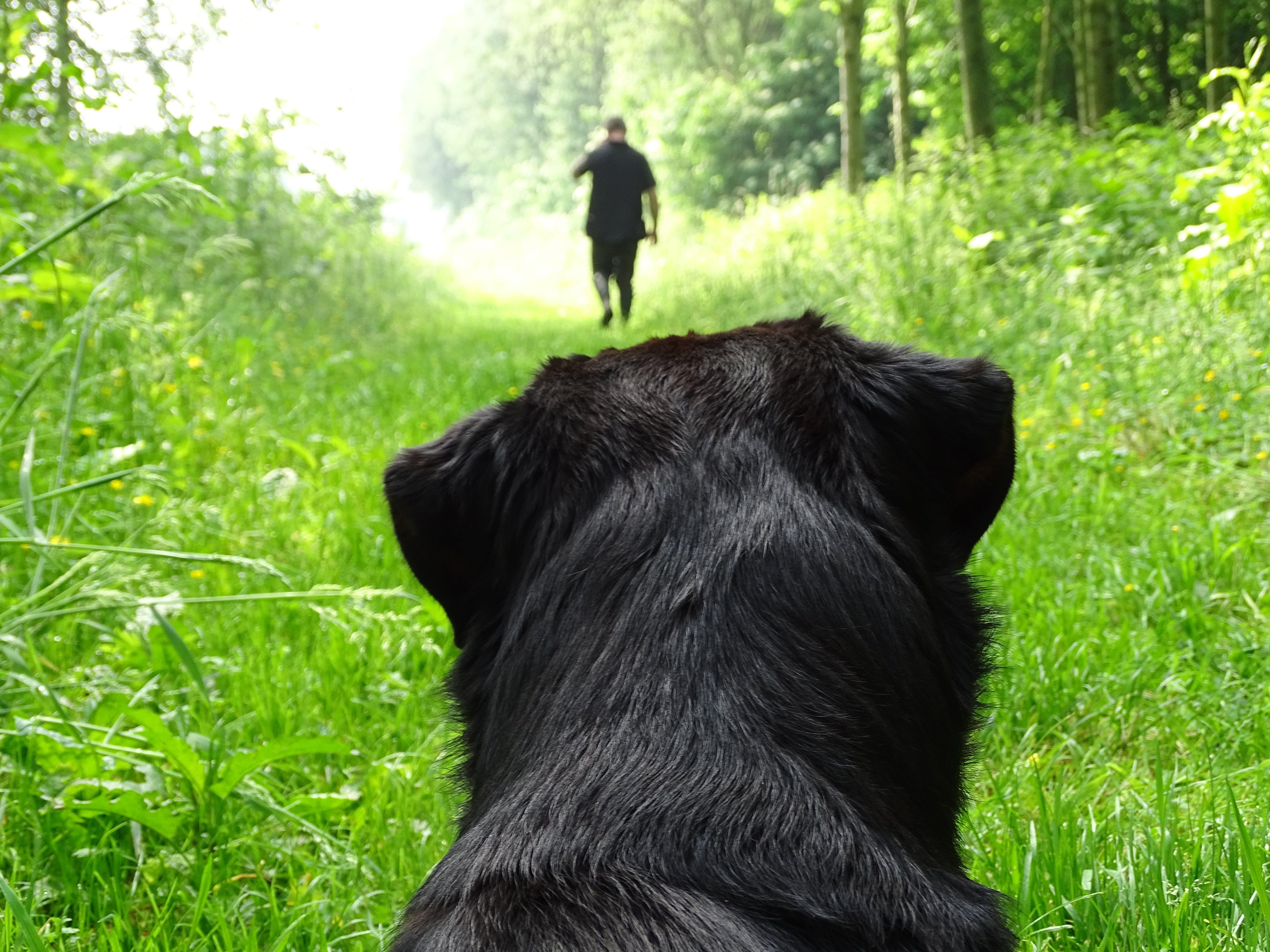 animal, animal photography, back view