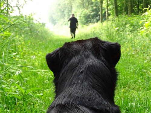 Short-coated Black Dog on Grass Field