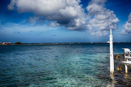 Immagine gratuita di barriera corallina