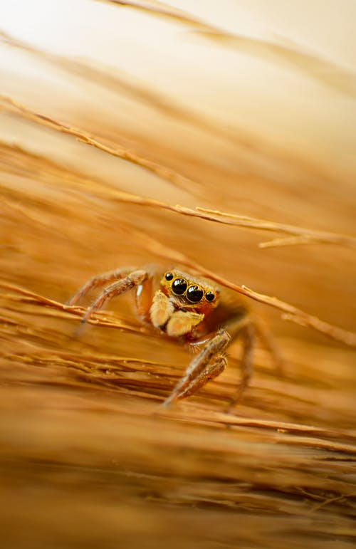 Macro Photography of a Spider
