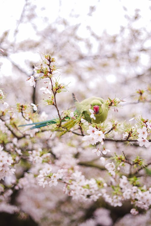Immagine gratuita di albero, animale, appollaiato, bocciolo