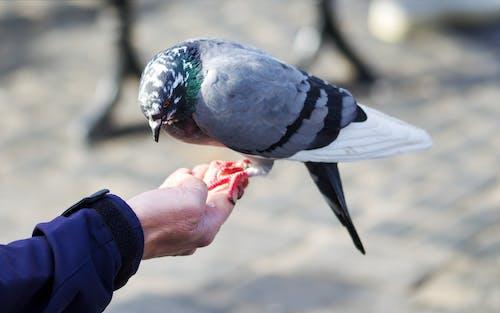 Person Feeding a Pigeon