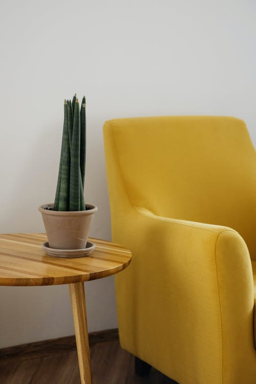Creative composition of comfortable yellow armchair with soft cushion and round wooden table with green home plant in pot against white wall in light apartment or flat with wooden floor