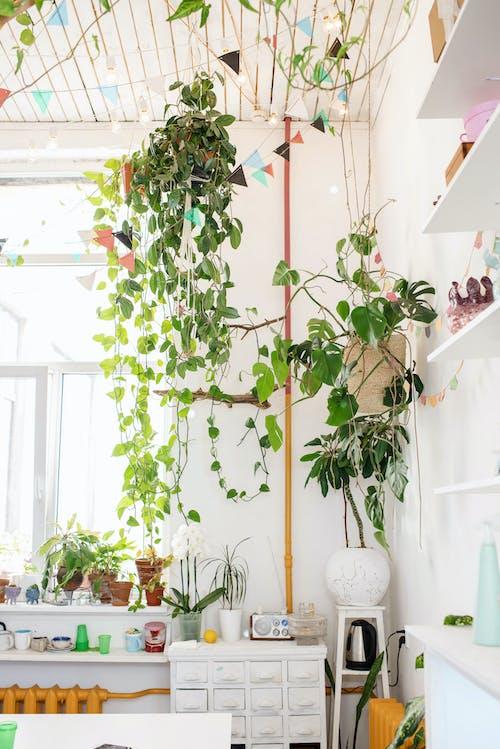 bitki örtüsü, büyüme, çağdaş, çiçek içeren Ücretsiz stok fotoğraf