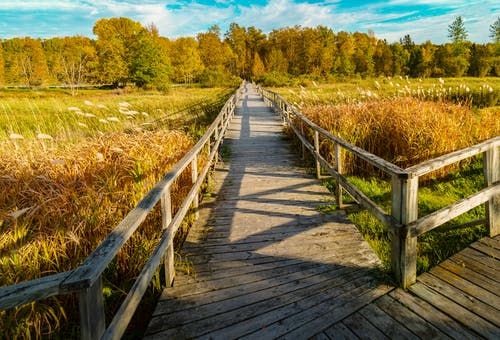 木棧道 的 免费素材照片