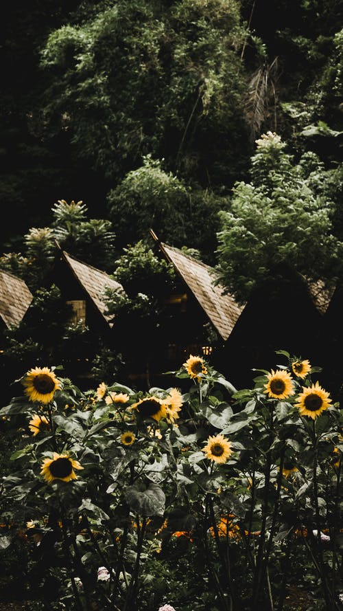 Free stock photo of beautiful flowers, beautiful home, central park, dark background