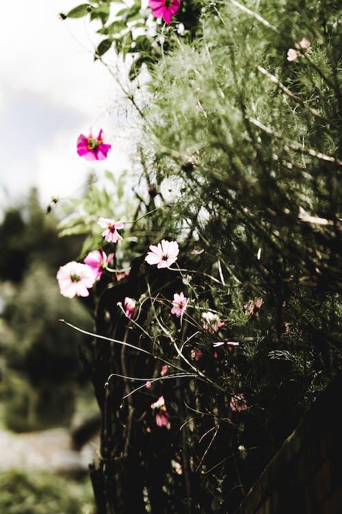 Free stock photo of beautiful flowers, beautiful home, bright, bright background
