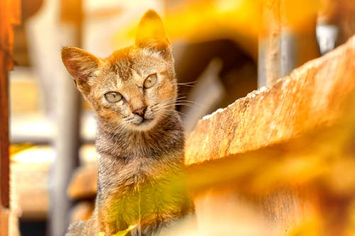 Free stock photo of afternoon, animal, cat, dramatic